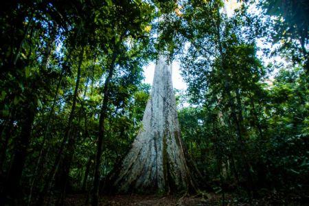 MT tem redução de 41% no desmatamento em dezembro