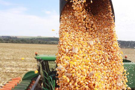 MT deve se manter na liderança como maior produtor de milho e soja pelos próximos 10 anos