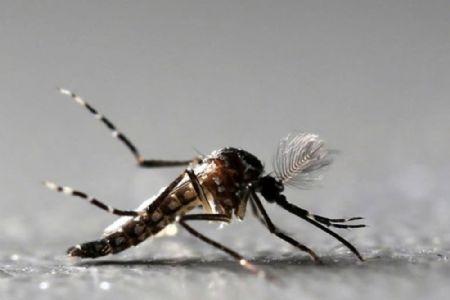 Cuiabá é a capital com maior risco de surto de dengue, chikungunya e zika, diz Ministério da Saúde