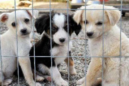 Feira de adoção acontece neste sábado e tem 45 cachorros e gatos